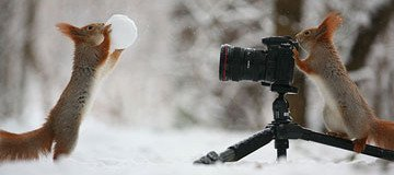 Este fotógrafo capturó la más adorable sesión de fotos de ardillas que has visto nunca.