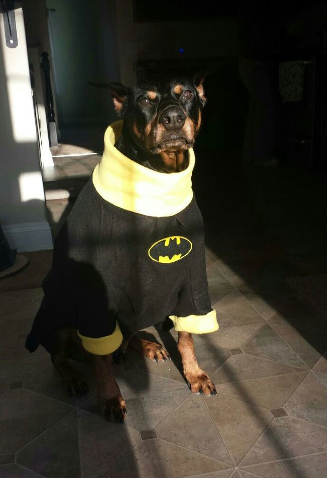 superheroes-animales10