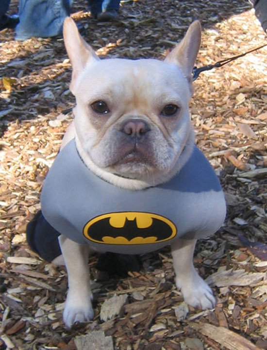 superheroes-animales13