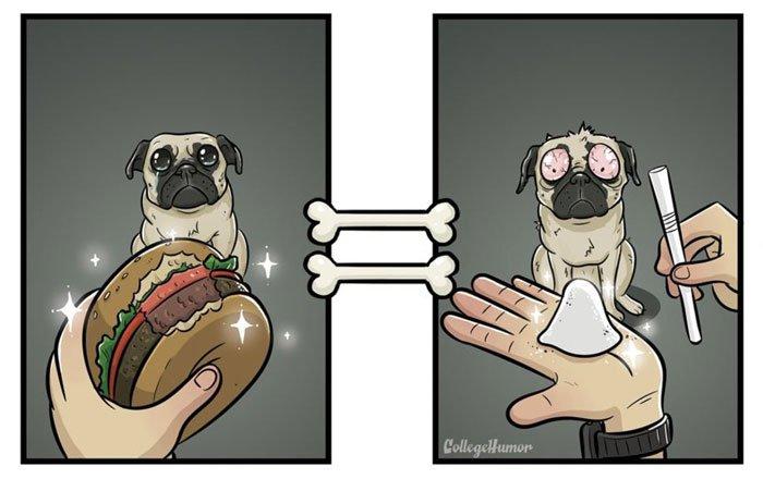 vision-mundo-perro-humano2