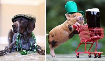 20 Animales con estilo que están preparados para empezar la fiesta de San Patricio.
