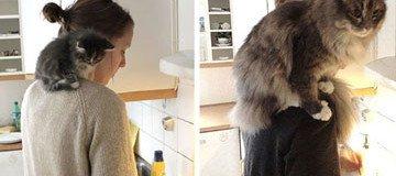 15 Hermosas fotografías antes y después de gatos creciendo.