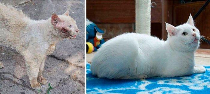 antes-despues-gatos-rescatados-10
