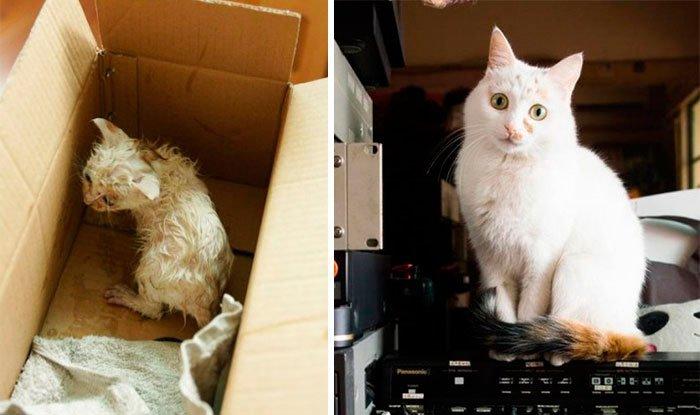 antes-despues-gatos-rescatados-11