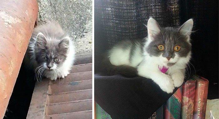 antes-despues-gatos-rescatados-12