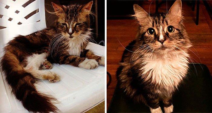 antes-despues-gatos-rescatados-13