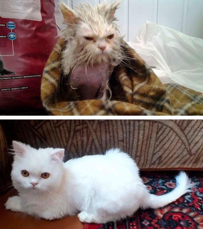 antes-despues-gatos-rescatados-14