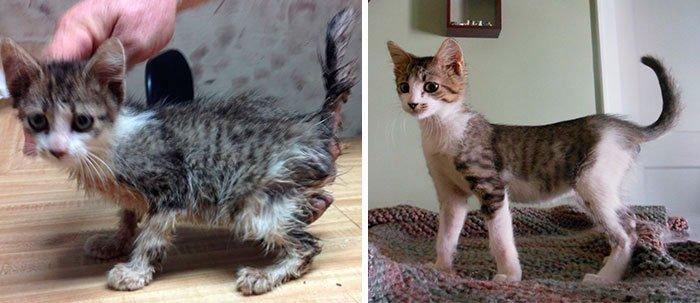antes-despues-gatos-rescatados-15