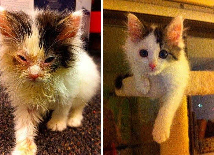 antes-despues-gatos-rescatados-2
