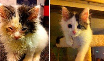 15 Potentes fotos antes y después muestran como un rescate puede cambiar la vida de un gato.