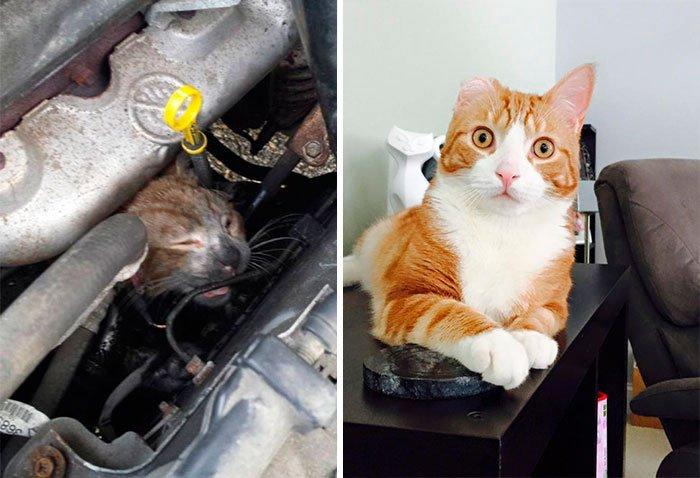 antes-despues-gatos-rescatados-5