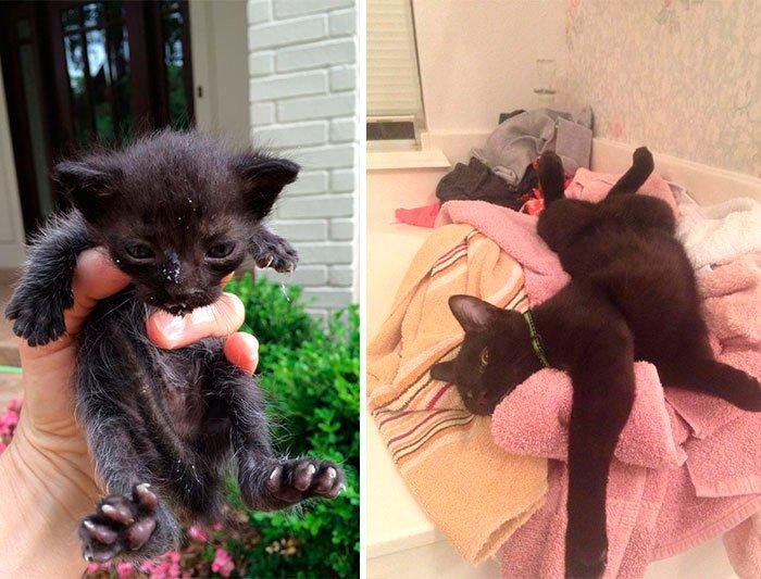 antes-despues-gatos-rescatados-6