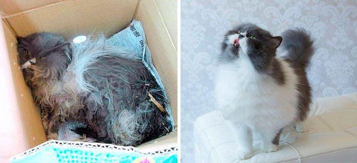 antes-despues-gatos-rescatados-7