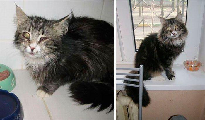 antes-despues-gatos-rescatados-8