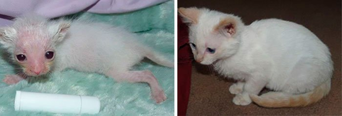 antes-despues-gatos-rescatados-9
