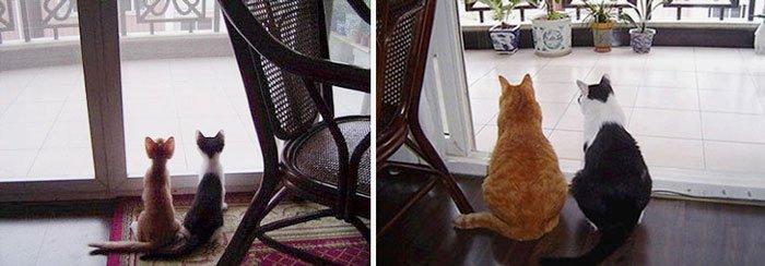 antes-despues-gatos1
