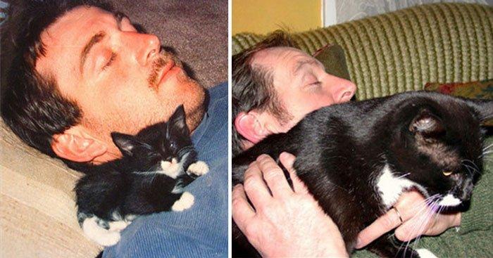antes-despues-gatos14
