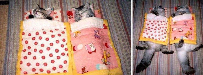 antes-despues-gatos2