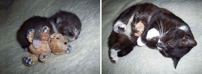 antes-despues-gatos3