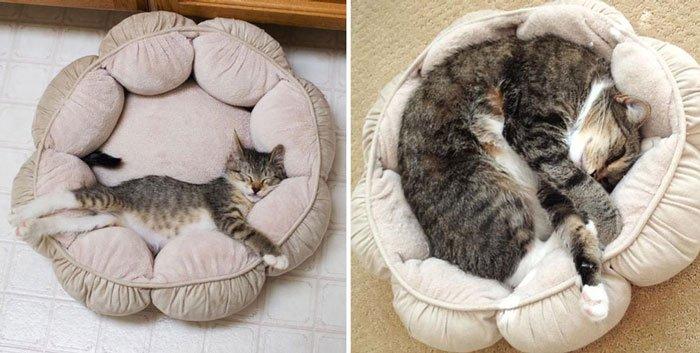 antes-despues-gatos5