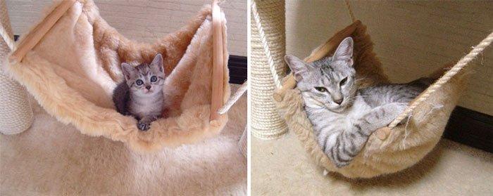 antes-despues-gatos8