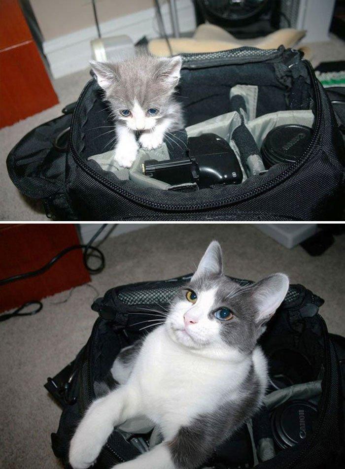 antes-despues-gatos9