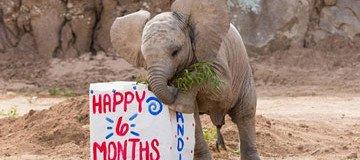 La fiesta de cumpleaños de este pequeño elefante es lo más lindo que verás hoy.