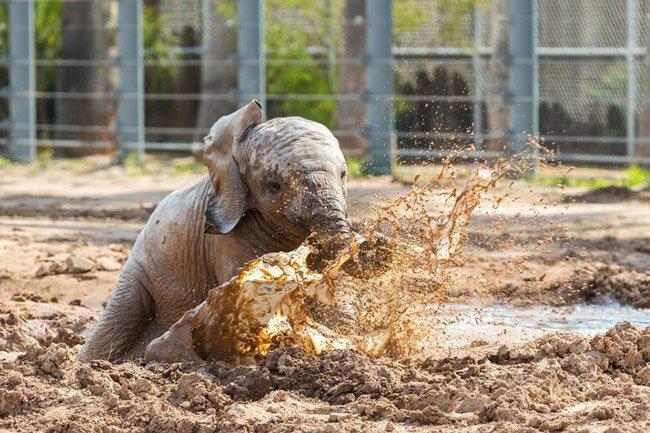bebe-elefante-excitado1