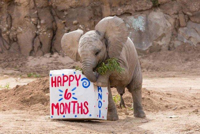 bebe-elefante-excitado2