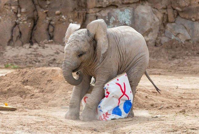 bebe-elefante-excitado3