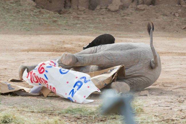 bebe-elefante-excitado4