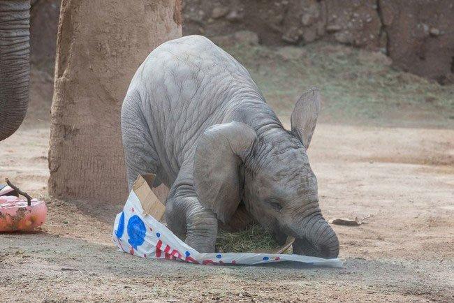 bebe-elefante-excitado5
