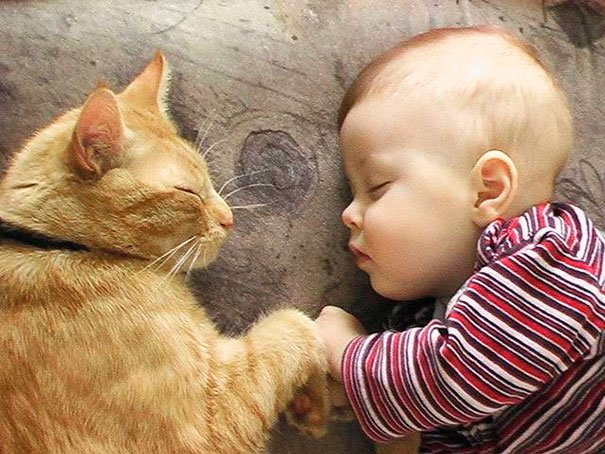 bebes-con-gatos-11