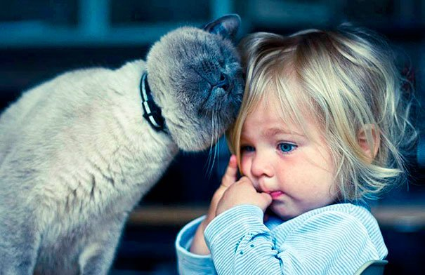 bebes-con-gatos-2