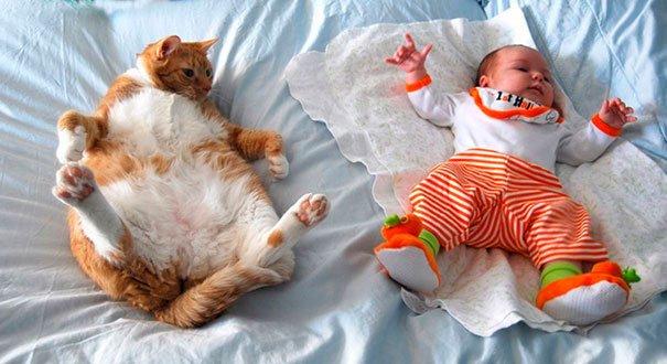 bebes-con-gatos-3