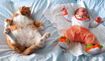 20 Fotos que demuestran por qué todo niño pequeño necesita un gato en su vida.