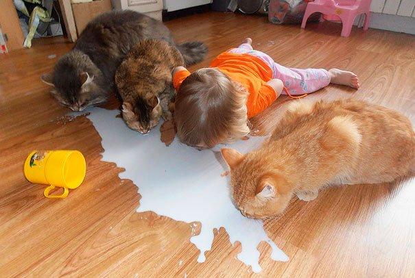 bebes-con-gatos-4