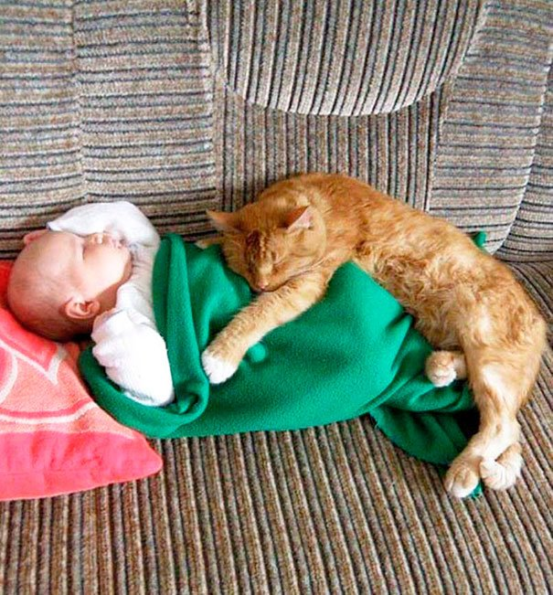 bebes-con-gatos-5