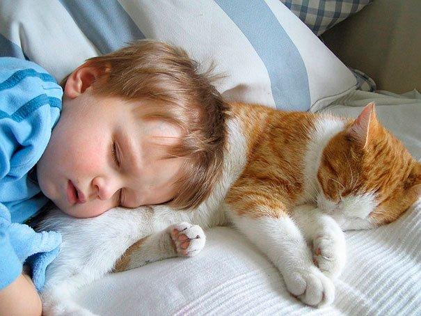bebes-con-gatos-7
