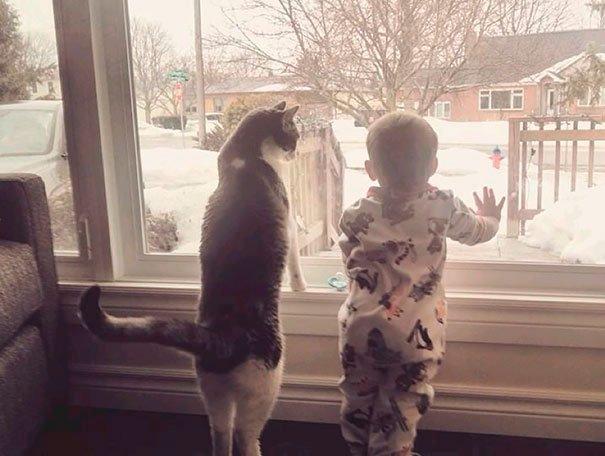 bebes-con-gatos-8