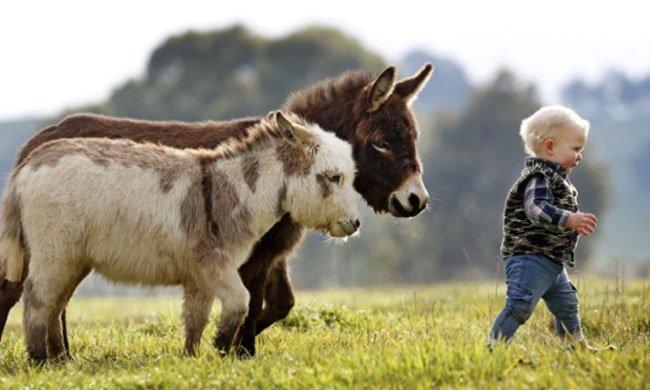 burros-miniatura1