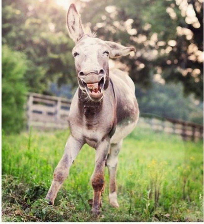 burros-miniatura10
