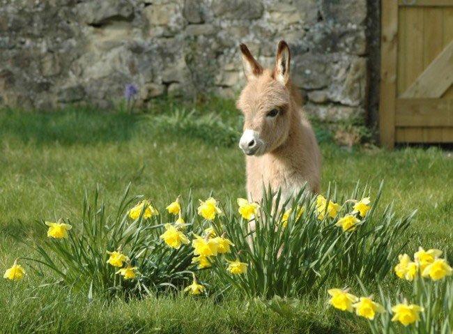 burros-miniatura14