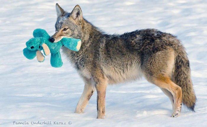 coyote-salvaje-juguete2