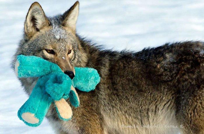 coyote-salvaje-juguete3