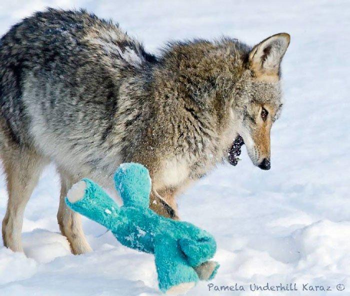 coyote-salvaje-juguete6