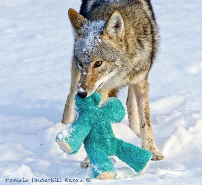coyote-salvaje-juguete7