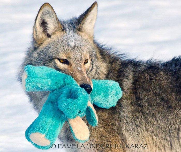 coyote-salvaje-juguete8