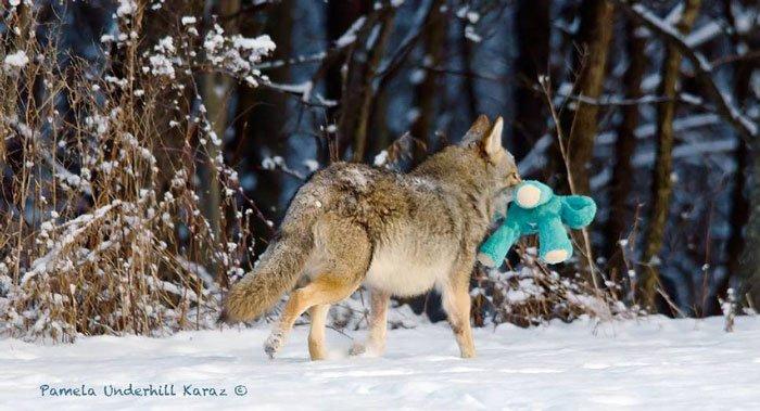 coyote-salvaje-juguete9