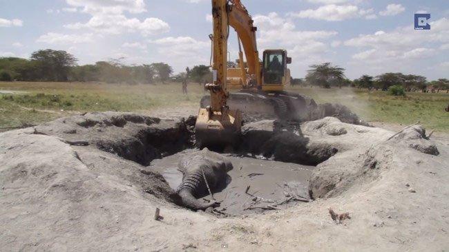 elefante-atrapado-barro-kenia3